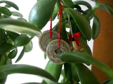 Комнатные растения для богатства в доме